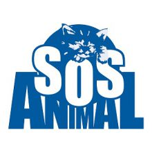 ACADEMIA-DE-PELUQUERÍA-CANINA-SOS-ANIMAL-FORMACIÓN - ACADEMIAS / FORMACION